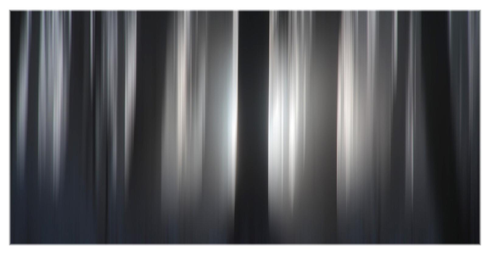 13 wald-licht